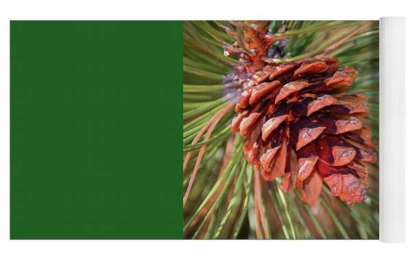 Pine Cone Yoga Mat by Patti Deters