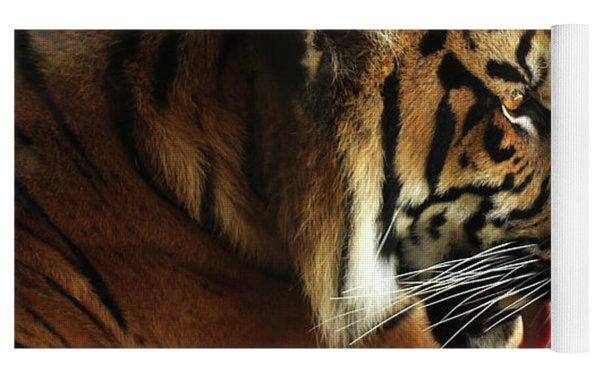 Tiger On Black Yoga Mat by Alison Frank