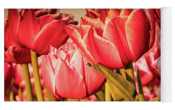 Tulip Fields Yoga Mat by Anjo Ten Kate