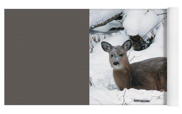 Whitetail Deer In Snow 120502 Yoga Mat by Rick Veldman