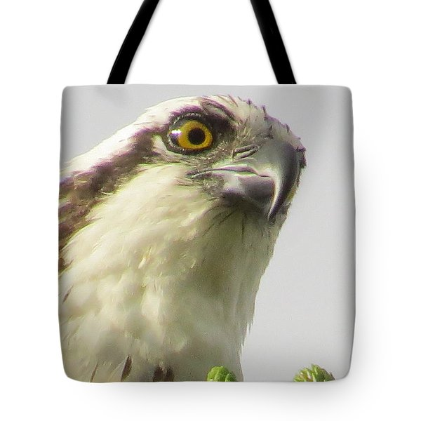 Eye Of The Osprey Tote Bag by Zina Stromberg