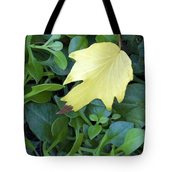 Fallen Yellow Leaf Tote Bag