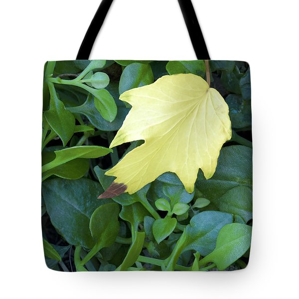 Tote Bag featuring the photograph  Fallen Yellow Leaf by Richard J Thompson
