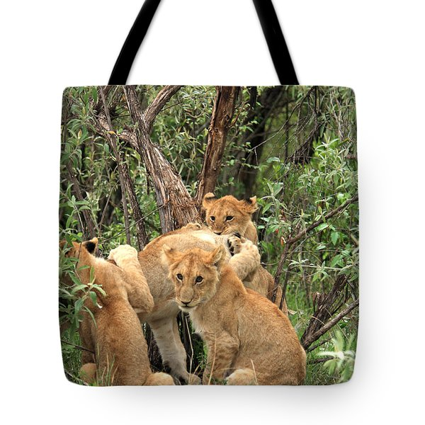 Masai Mara Lion Cubs Tote Bag by Aidan Moran
