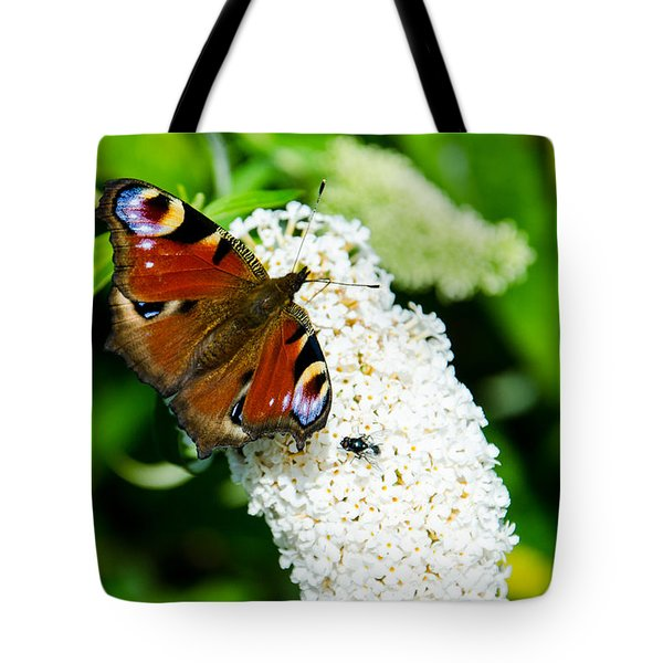Peacock Butterfly Tote Bag by Martina Fagan
