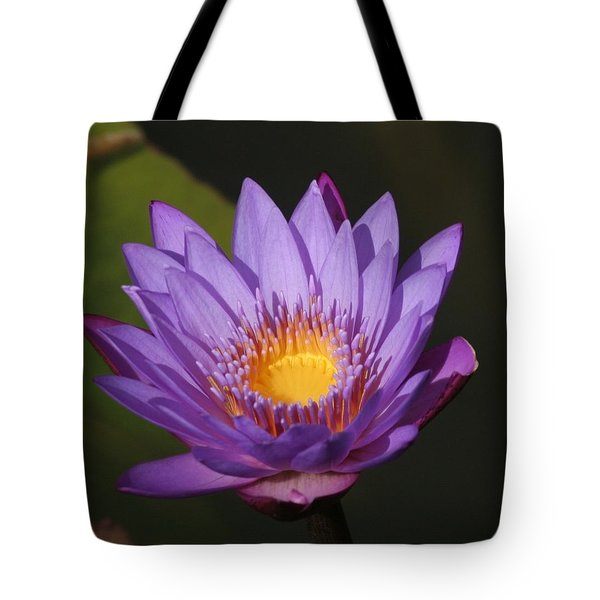 Purple Water Lily Tote Bag by Karen Silvestri