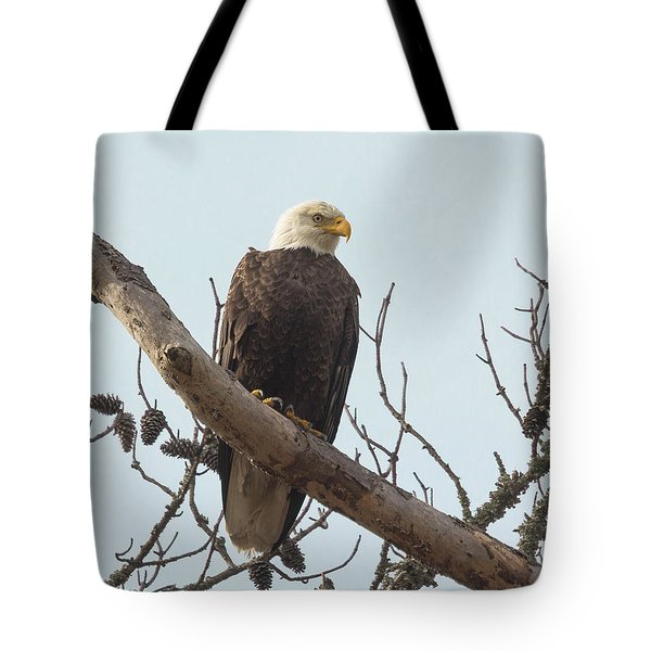 Resting Bald Eagle Tote Bag