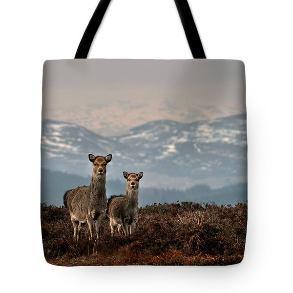 Sika Deer Tote Bag