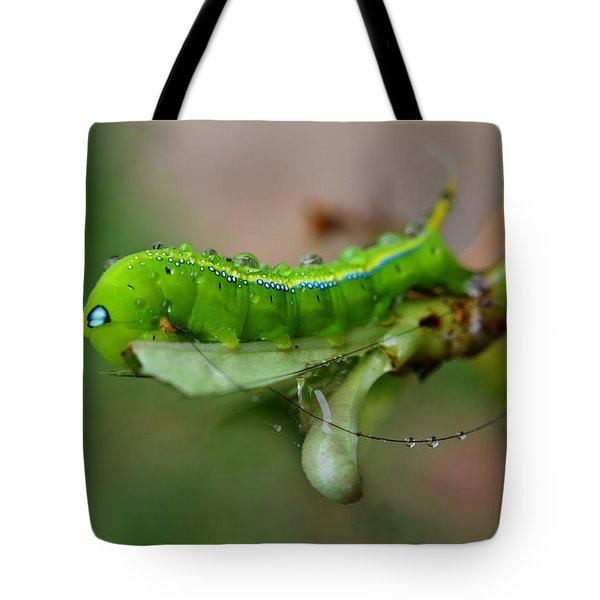 Wet Caterpillar Tote Bag by Michelle Meenawong