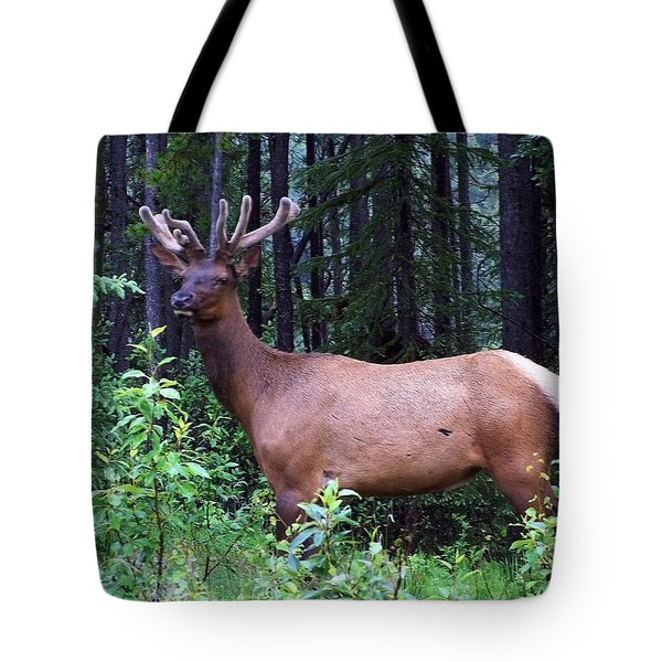 062505 Elk In Velvet Tote Bag