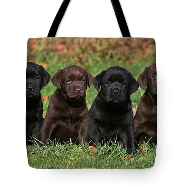 8 Labrador Retriever Puppies Brown And Black Side By Side Tote Bag