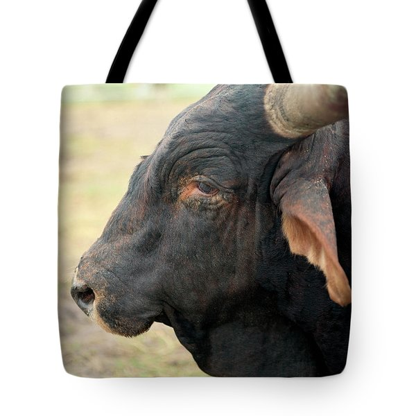 A Bull Waits At A Prca Professional Tote Bag