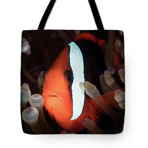 A Red And Black Anemonefish Swims Among Tote Bag