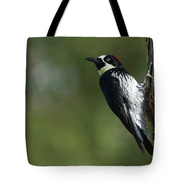 Tote Bag featuring the photograph Acorn Woodpecker - Melanerpes Formicivorus - Pic Glandivore by Nature and Wildlife Photography