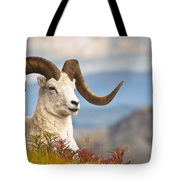 Adult Dall Sheep Ram Resting Tote Bag by Michael Jones