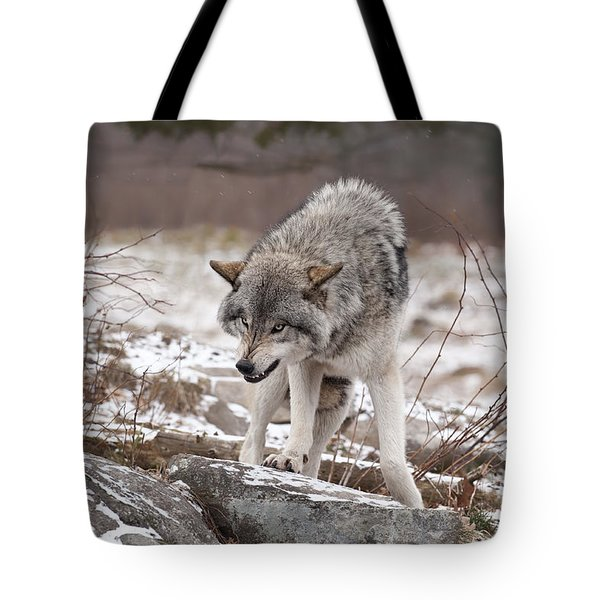 Tote Bag featuring the photograph Adult Timber Wolf by Wolves Only