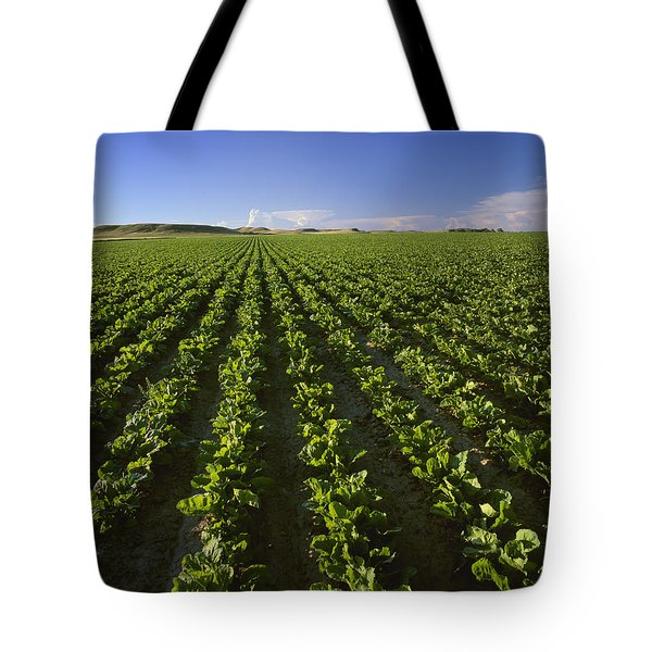 Agriculture - Field Of Maturing Sugar Tote Bag