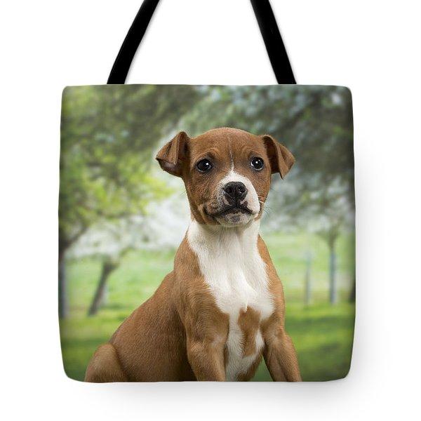 American Staffordshire Terrier Tote Bags   Fine Art America