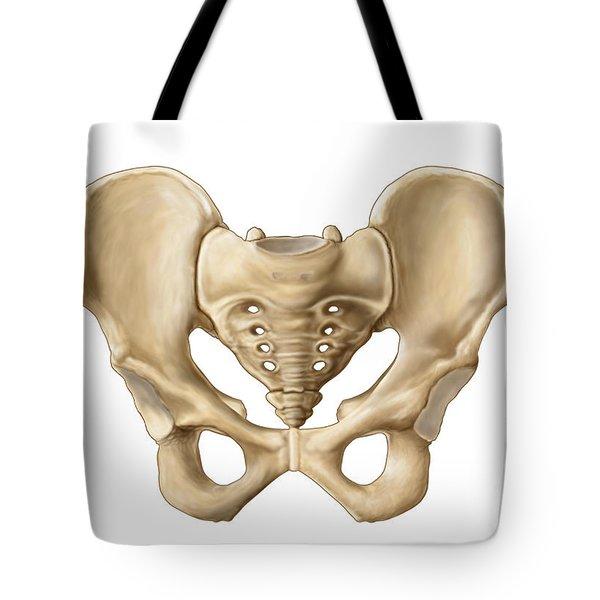 Anatomy Of Human Pelvic Bone Tote Bag by Stocktrek Images