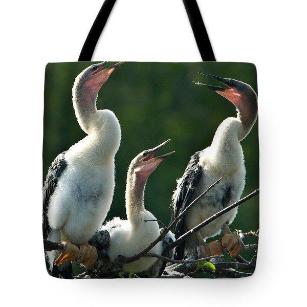 Anhinga Chicks Tote Bag by Mark Newman