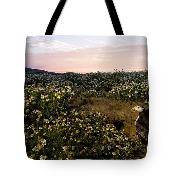 Atlantic Puffin At Burrow Skomer Island Tote Bag