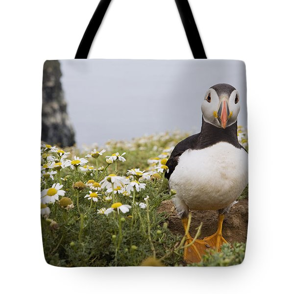 Atlantic Puffin In Breeding Plumage Tote Bag