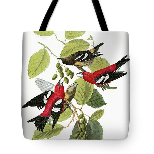 Audubon Crossbill Tote Bag