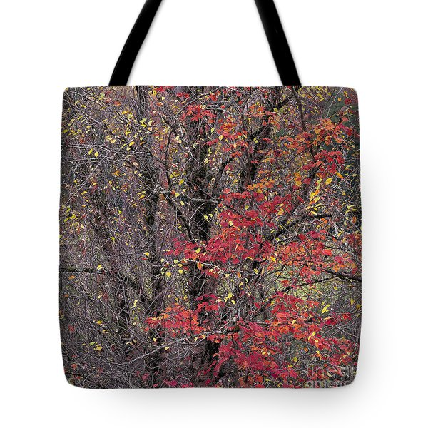 Tote Bag featuring the photograph Autumn's Palette by Alan L Graham