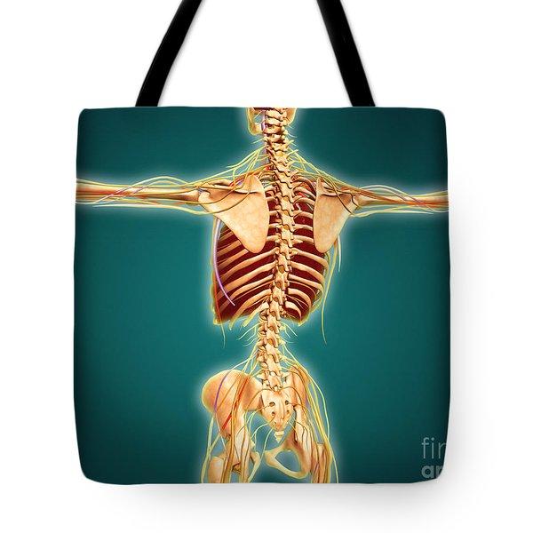 Back View Of Human Skeleton Tote Bag by Stocktrek Images