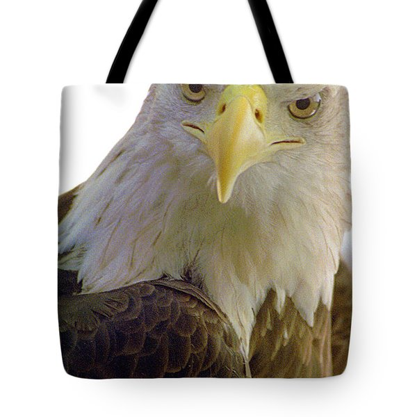 Bald Eagle Tote Bag by Steve Archbold