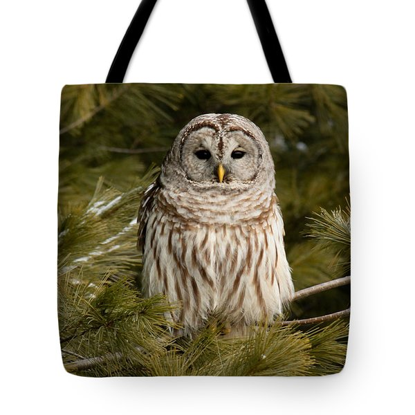 Barred Owl In A Pine Tree. Tote Bag by Michel Soucy