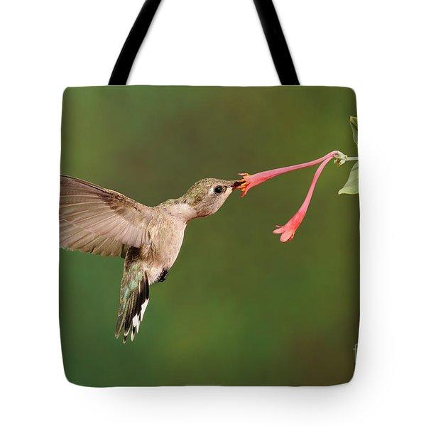 Black-chinned Hummingbird Tote Bag by Scott Linstead