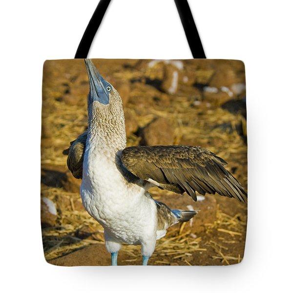 Blue-footed Booby Courtship Behavior Tote Bag