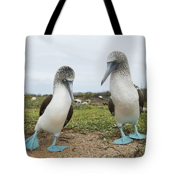 Blue-footed Booby Pair Courting Tote Bag by Tui De Roy