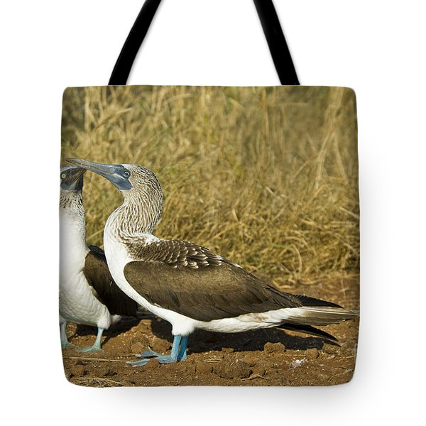 Blue-footed Booby Pair Tote Bag