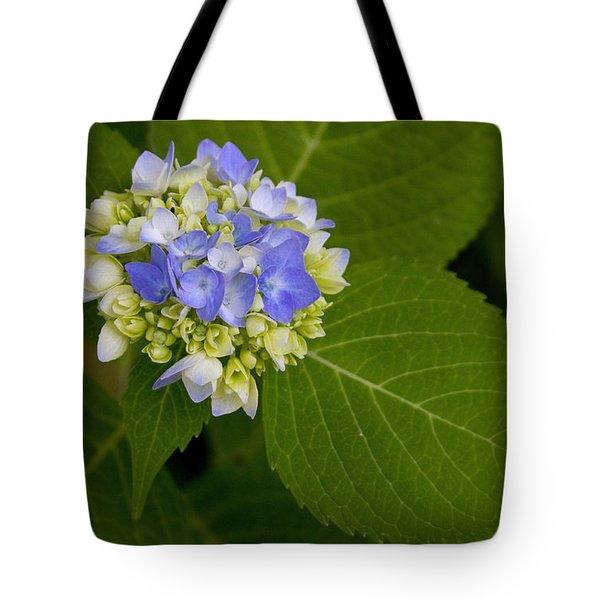 Blue Hydrangea Slow Eruption Tote Bag