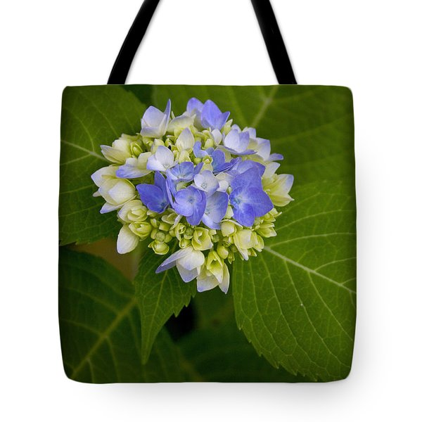 Tote Bag featuring the photograph Blue Hydrangea Slow Eruption by Ben Shields