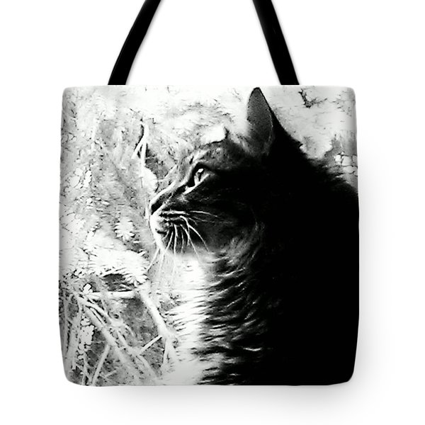 Tote Bag featuring the photograph Bo by Jacqueline McReynolds