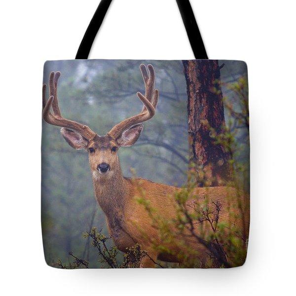 Buck Deer In A Mystical Foggy Forest Scene Tote Bag