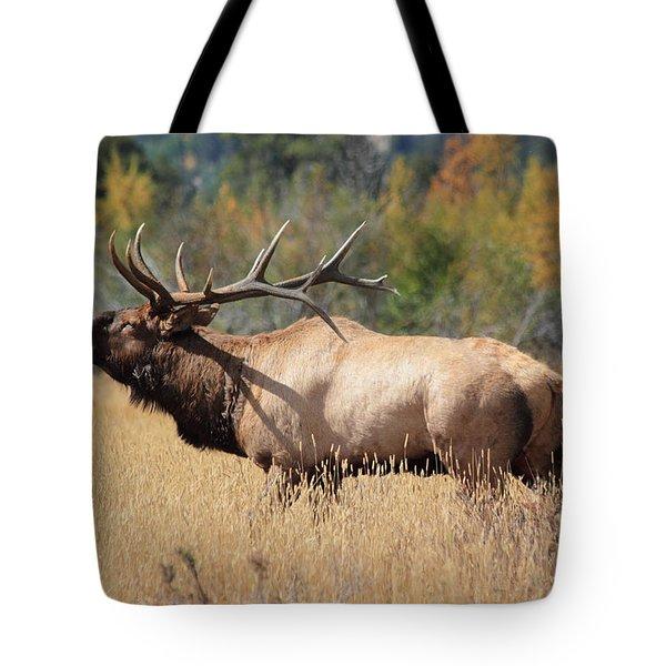 Bugling Bull Tote Bag
