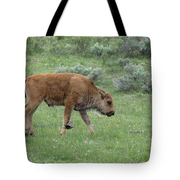 Calf And Cowbird Tote Bag