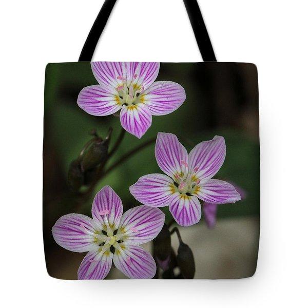 Carolina Spring Beauty Tote Bag