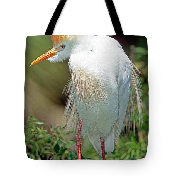 Cattle Egret Adult In Breeding Plumage Tote Bag by Millard H. Sharp