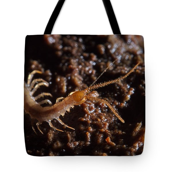 Cave Centipede Tote Bag