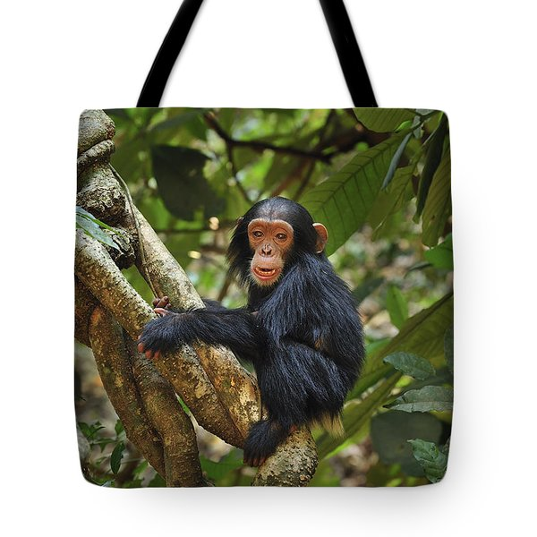 Chimpanzee Baby On Liana Gombe Stream Tote Bag by Thomas Marent