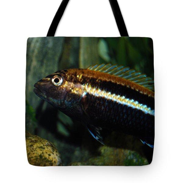Cichlid Tote Bag