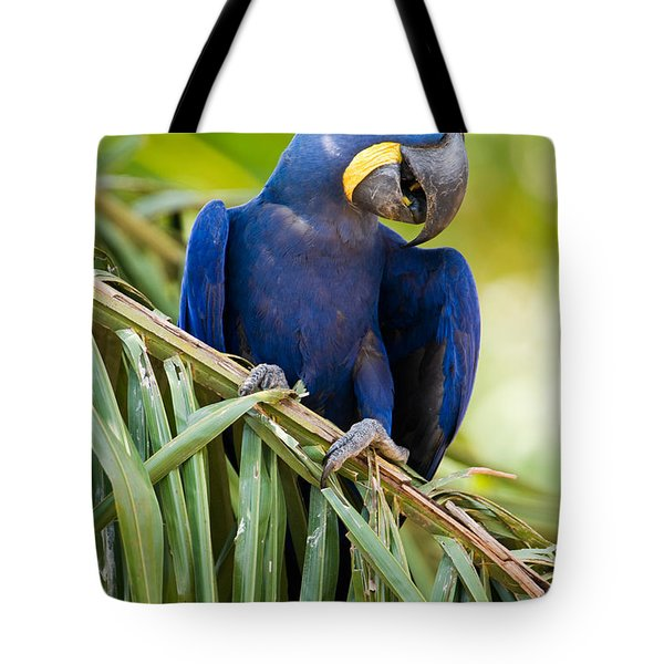 Close-up Of A Hyacinth Macaw Tote Bag