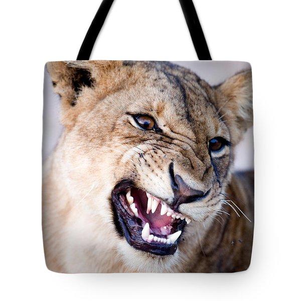 Close-up Of A Lioness Panthera Leo Tote Bag