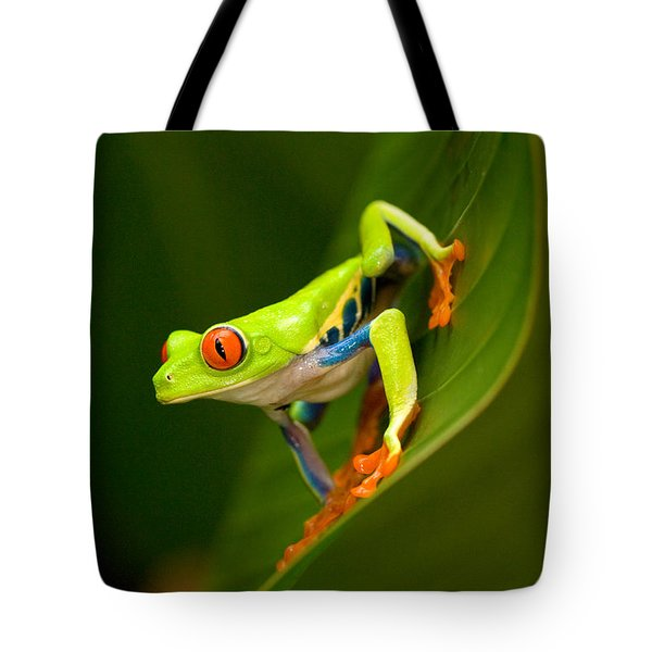 Close-up Of A Red-eyed Tree Frog Tote Bag