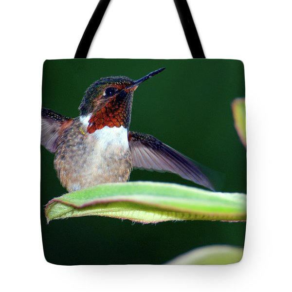 Close-up Of A Scintillant Hummingbird Tote Bag